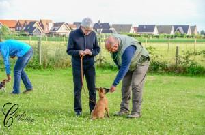 gehoorzaamheidstraining -  huishonden