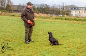 Training with Jan and his cocker
